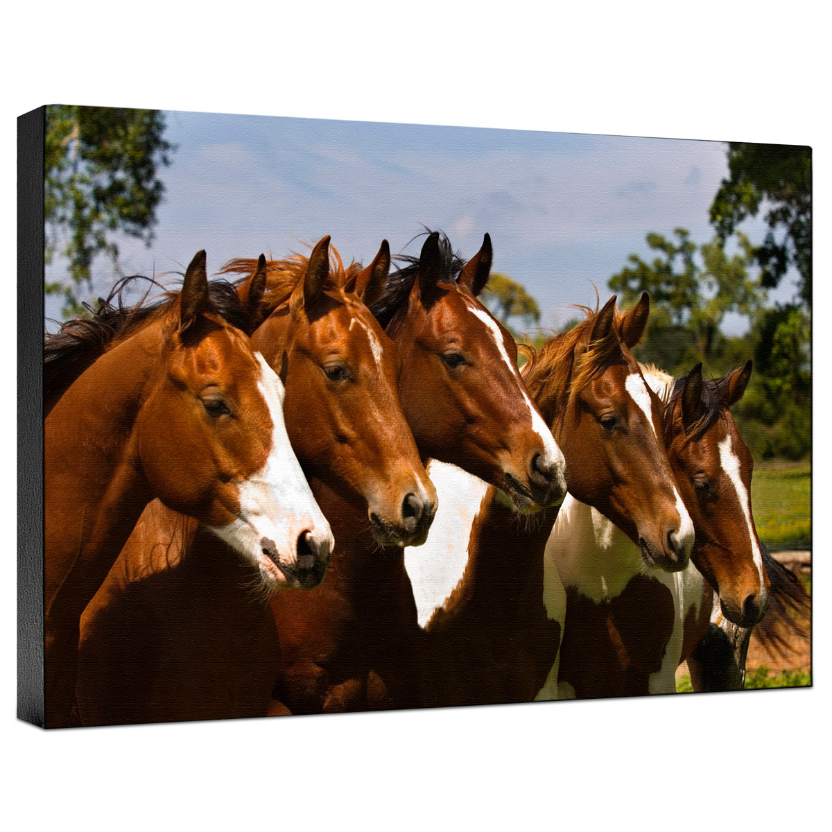 Horse Best Friends Gallery Wrapped Canvas