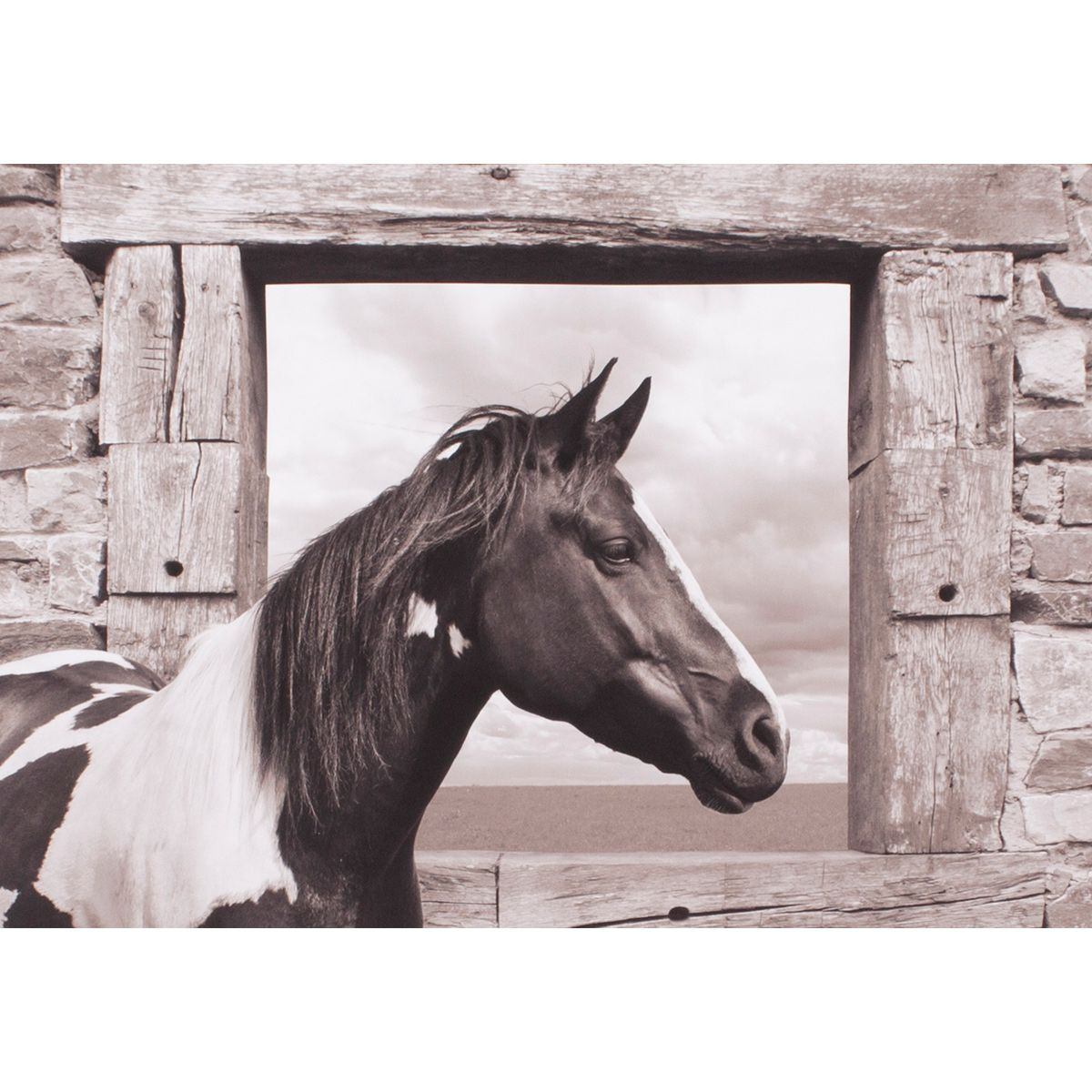 Horse Window Canvas Art