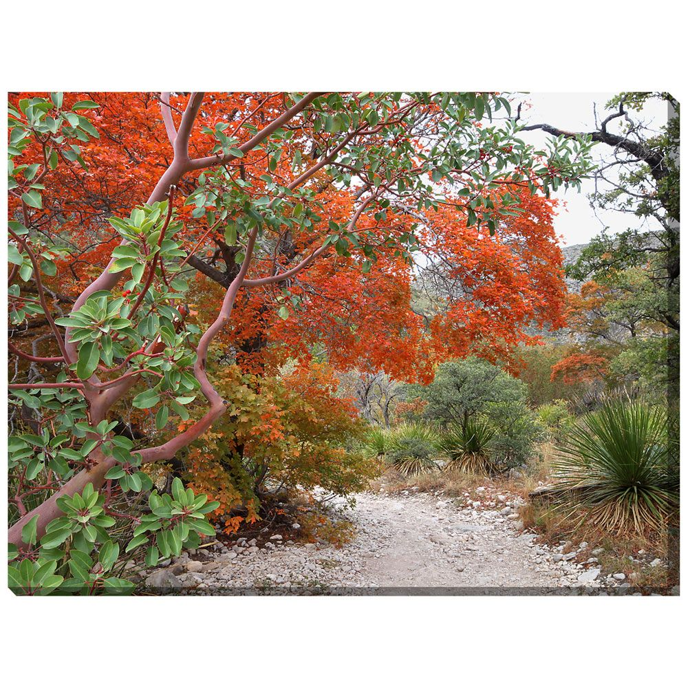 Madrone & Maple Indoor/Outdoor Canvas Art