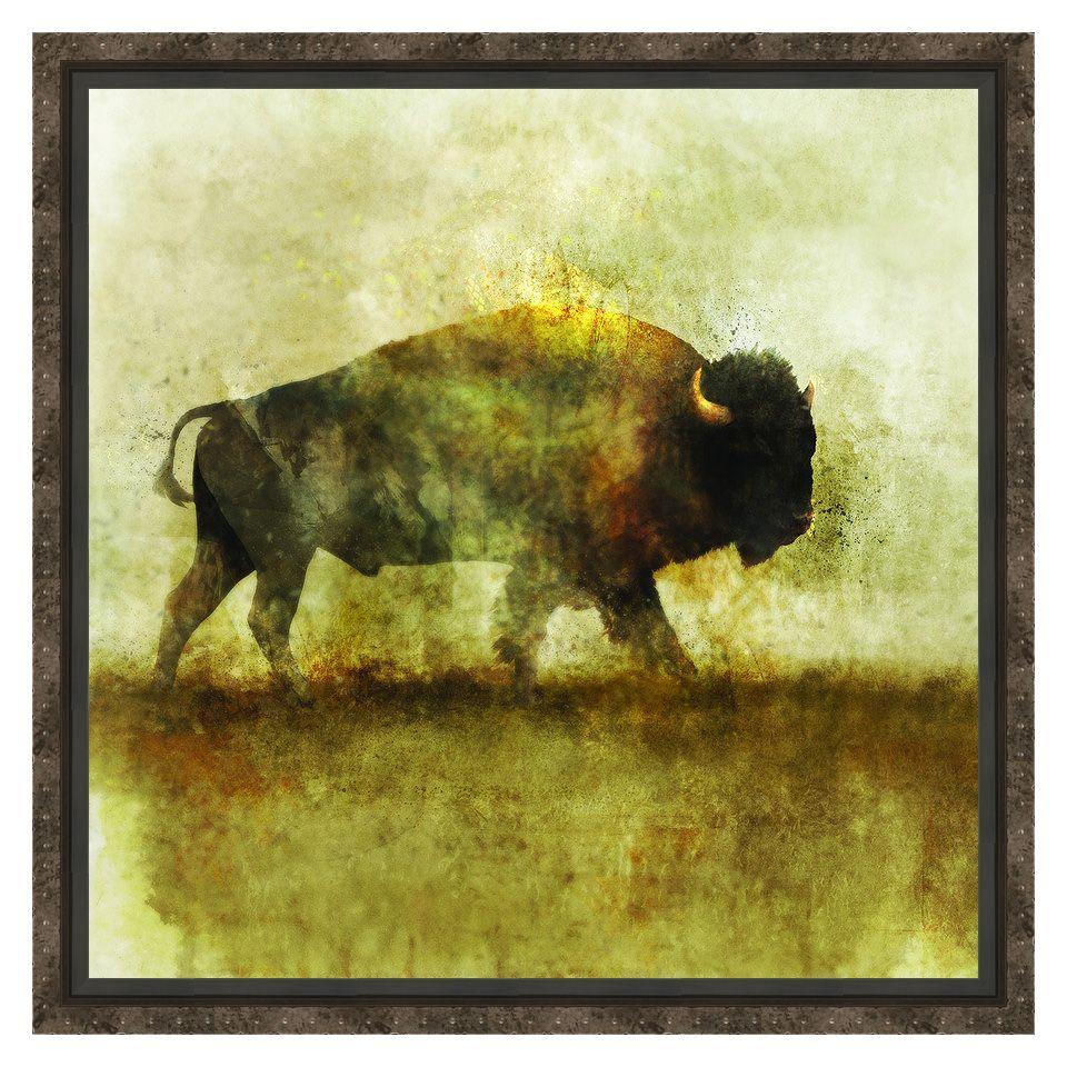 Peaceful Bison I Framed Canvas