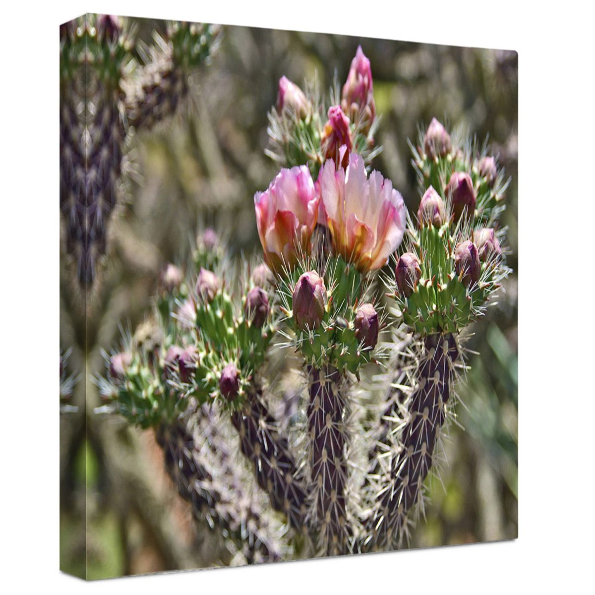 Pink Desert Blooms Wrapped Canvas