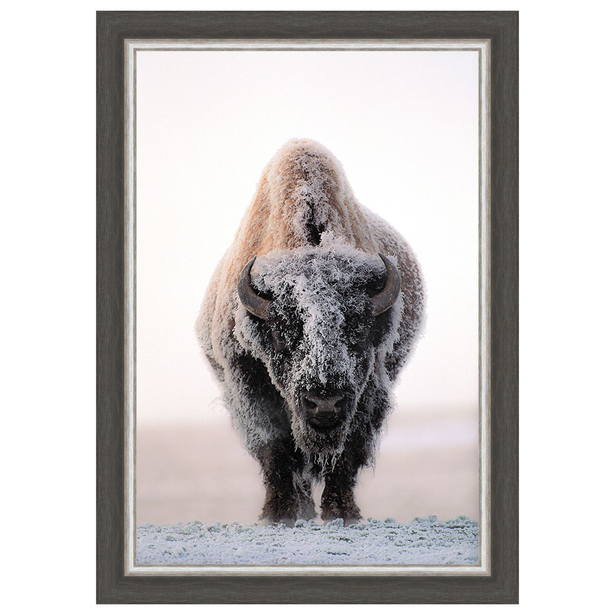 Plains Buffalo Framed Canvas
