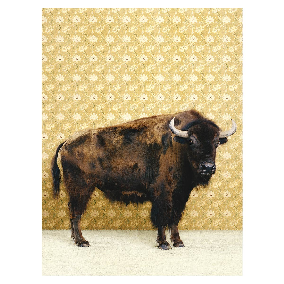 Posh Bison Canvas Art