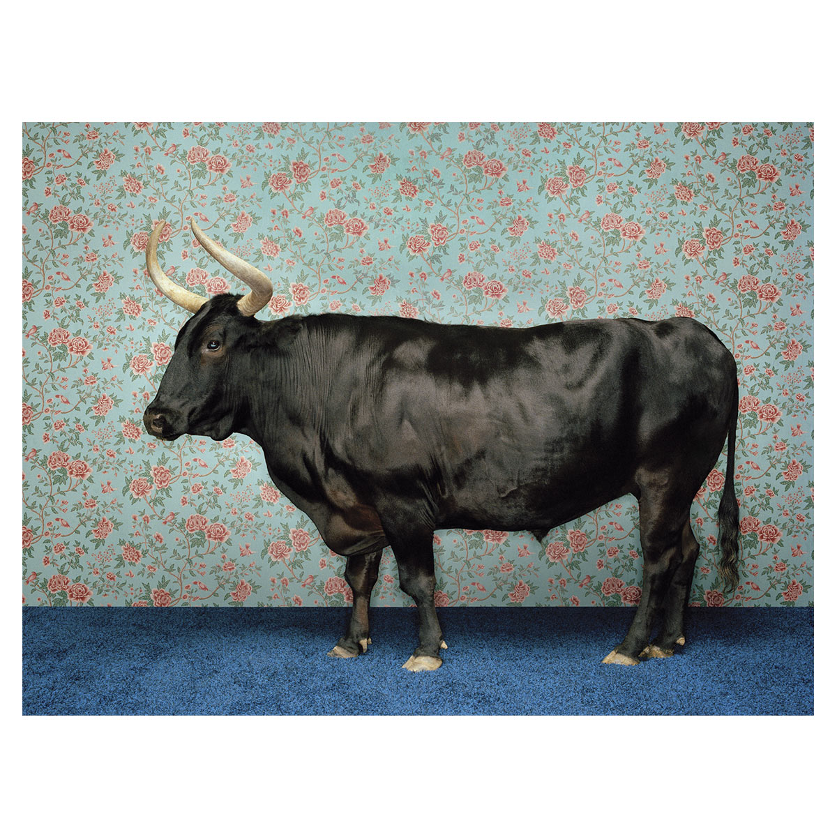 Posh Bull Canvas Art