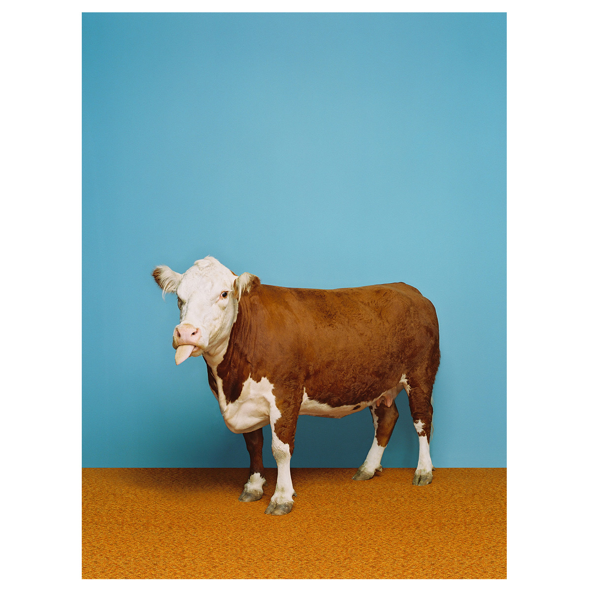Posh Cow Canvas Art