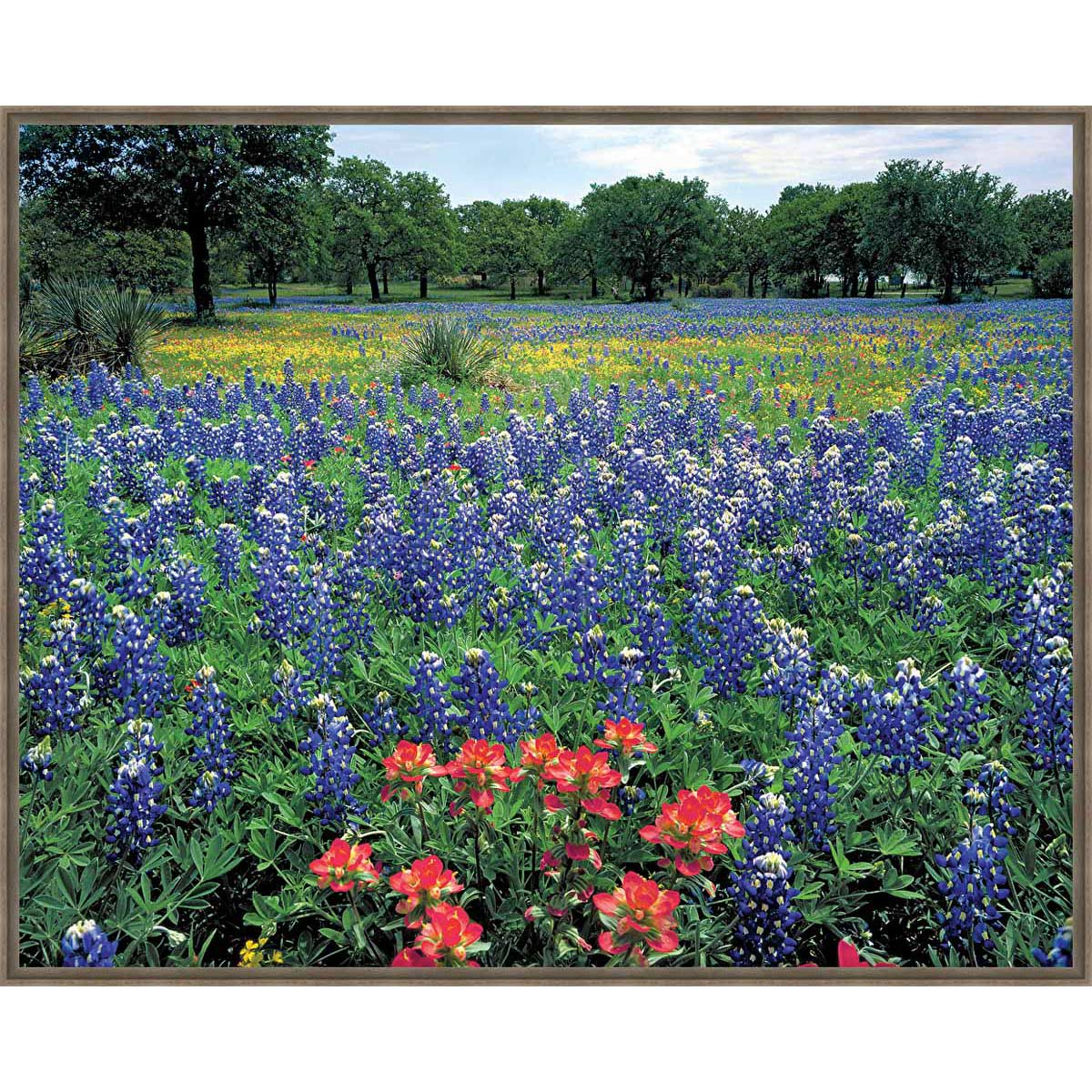 Prairie Flower Field Framed Canvas