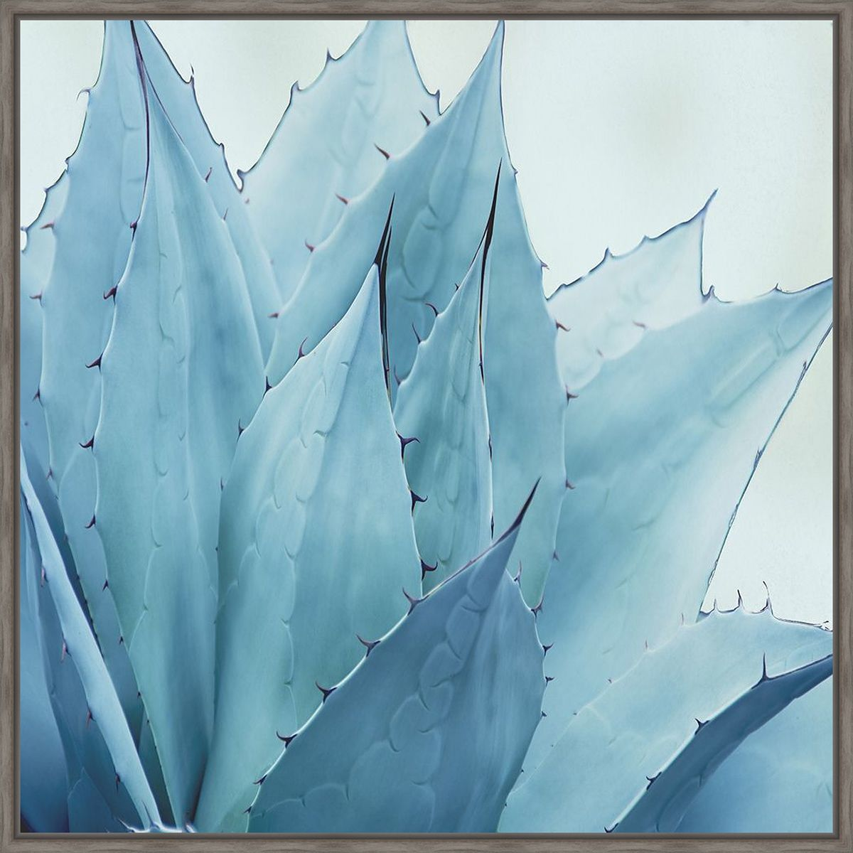 Prickly Desert II Canvas Art