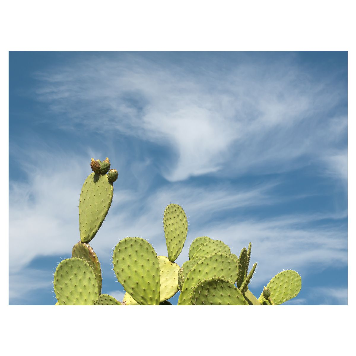 Prickly Pear Sky Canvas Art