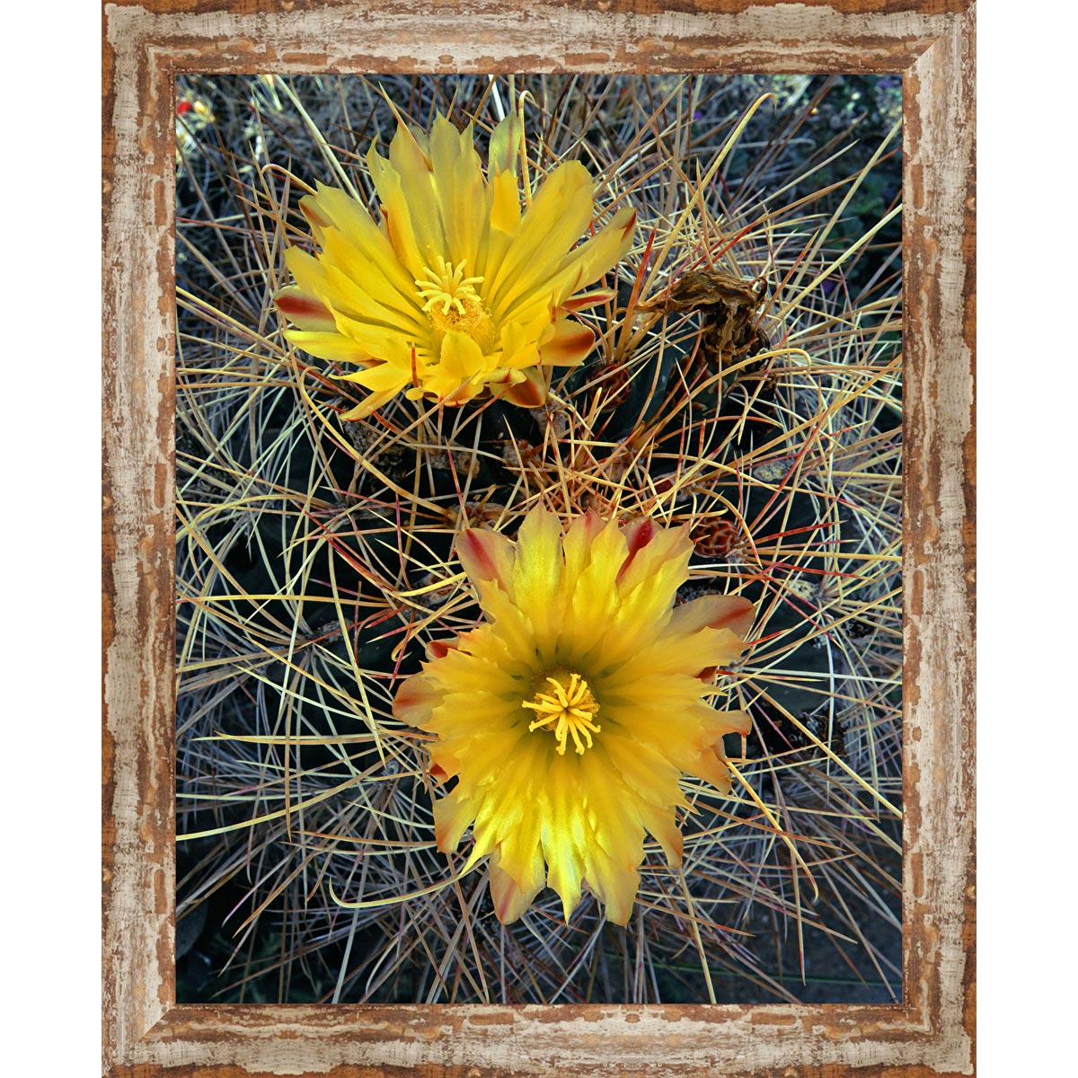 Scottsdale Cactus Framed Canvas