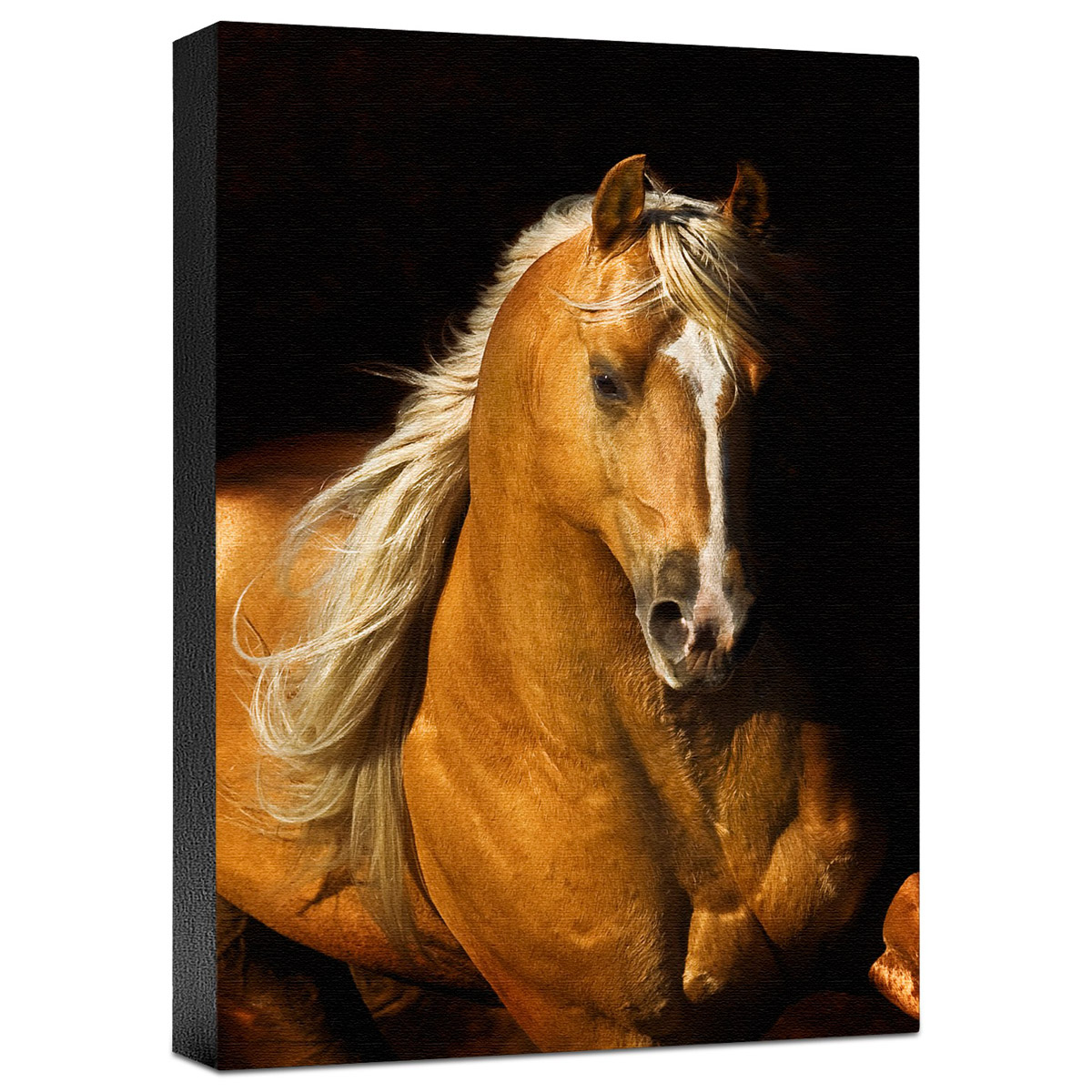 Sherry's Boy Gallery Wrapped Canvas