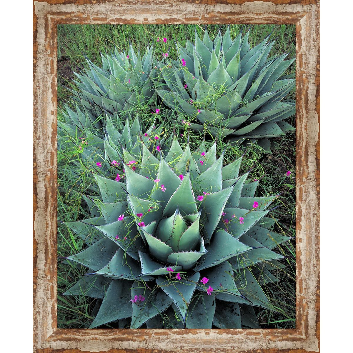 Silver City Cactus Framed Canvas
