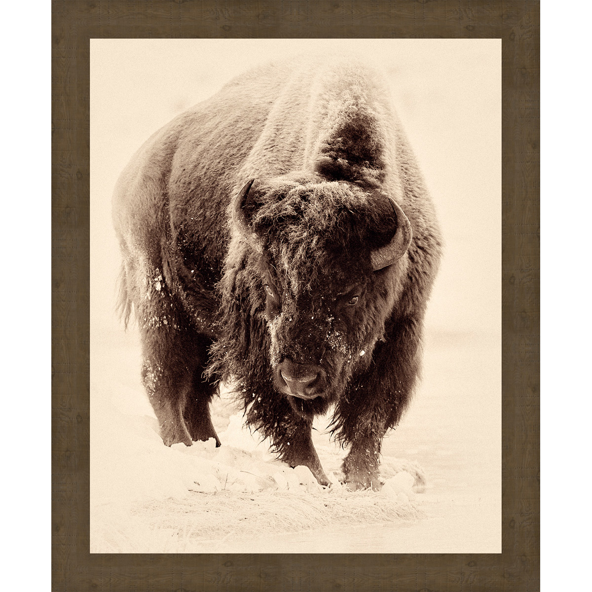 Snowy Buffalo Framed Wall Art