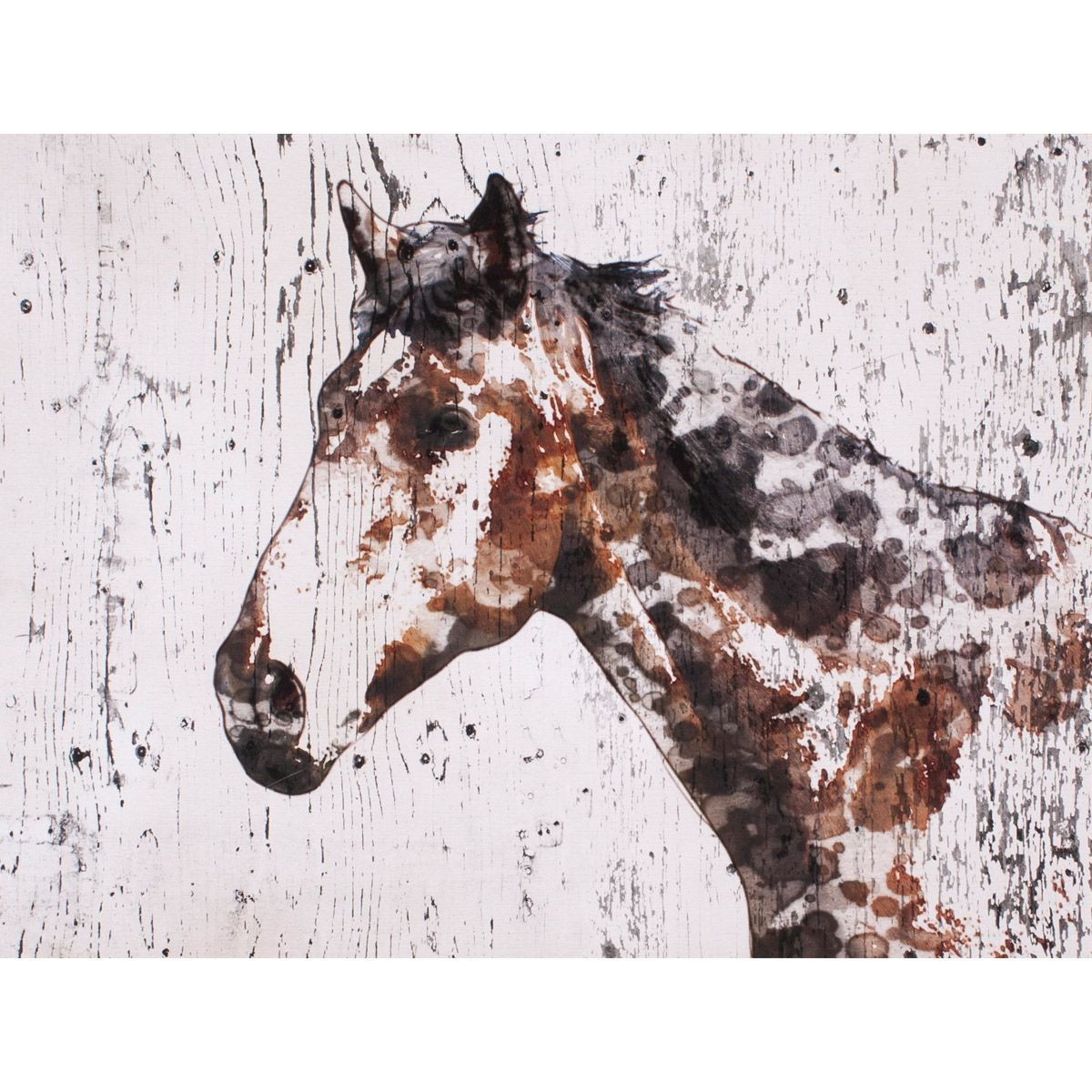 Spotted Horse II Canvas Art