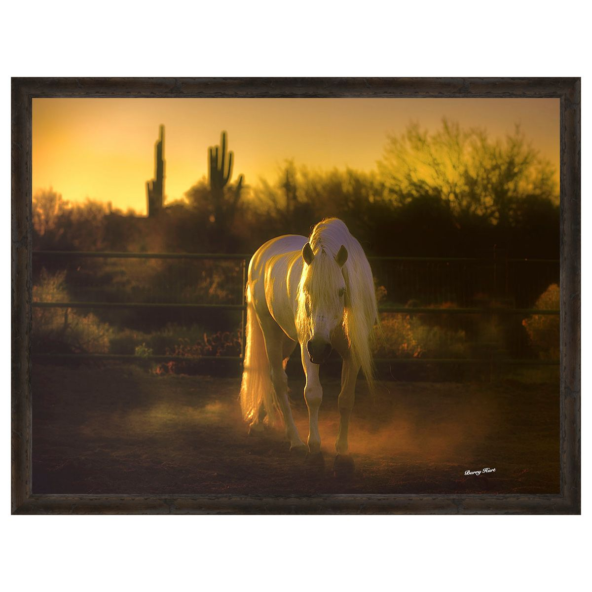 Stallion in the Garden Framed Canvas