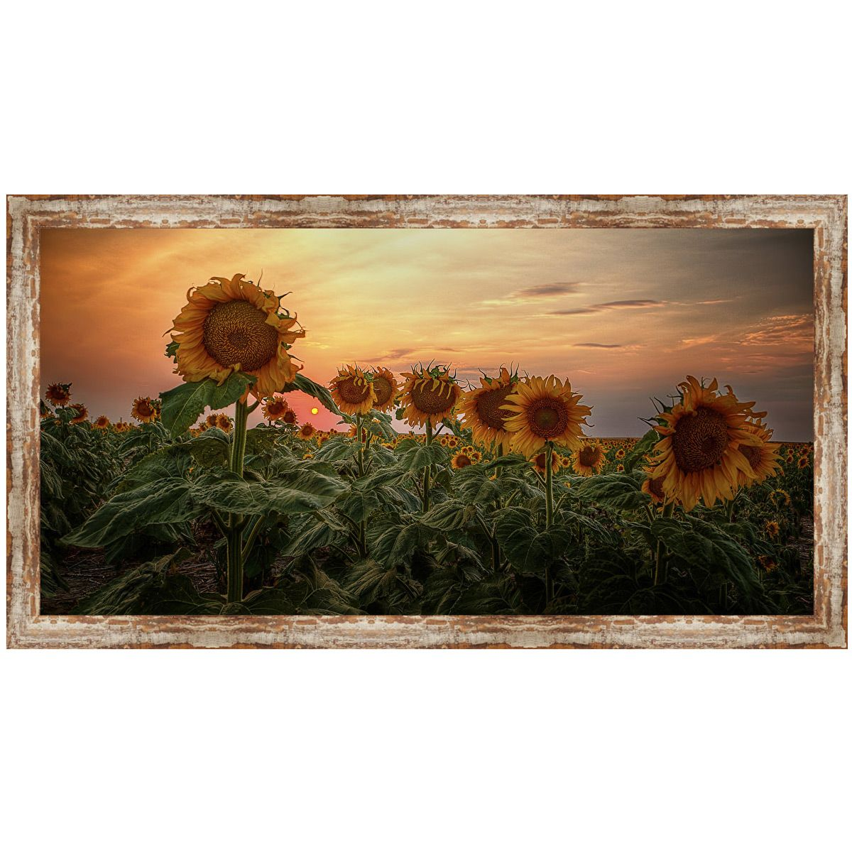 Sunflower Field Framed Art