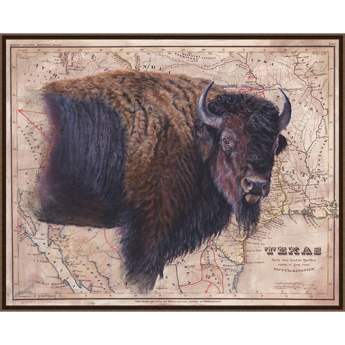 Texas Buffalo Framed Canvas