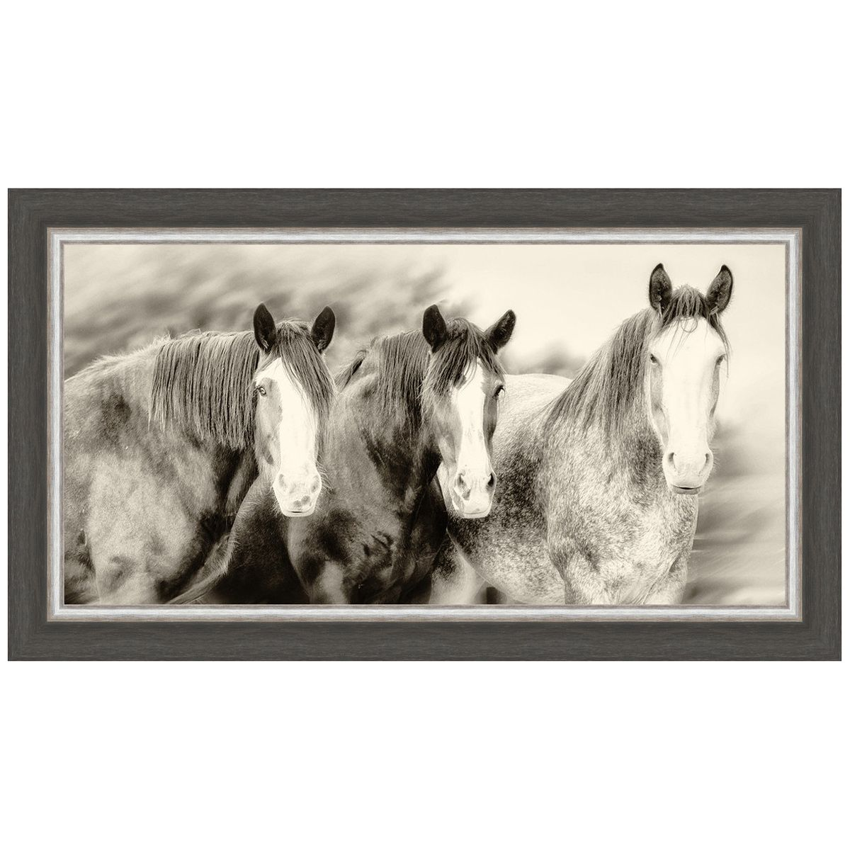 Three Amigos II Horse Framed Print