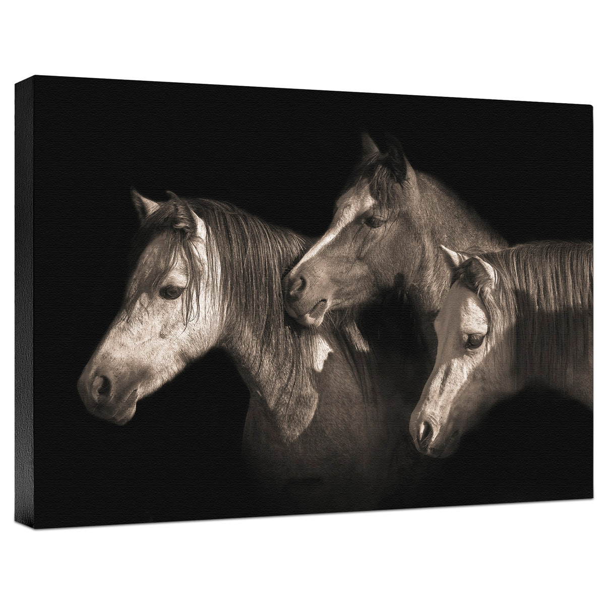 Three Ponies Gallery Wrapped Canvas