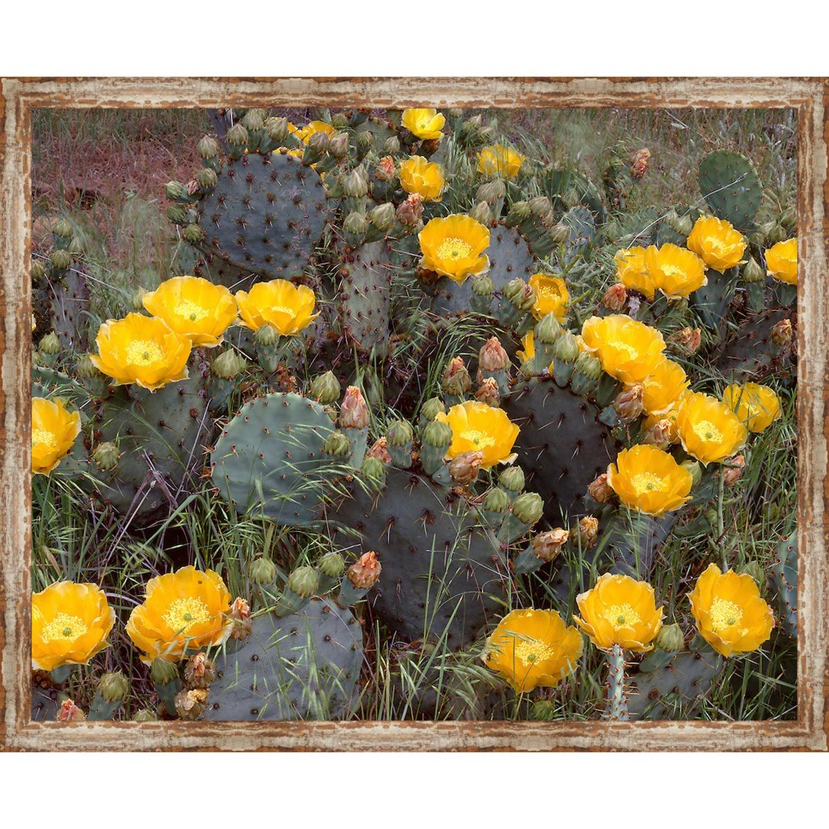 Vaca Cactus Framed Canvas