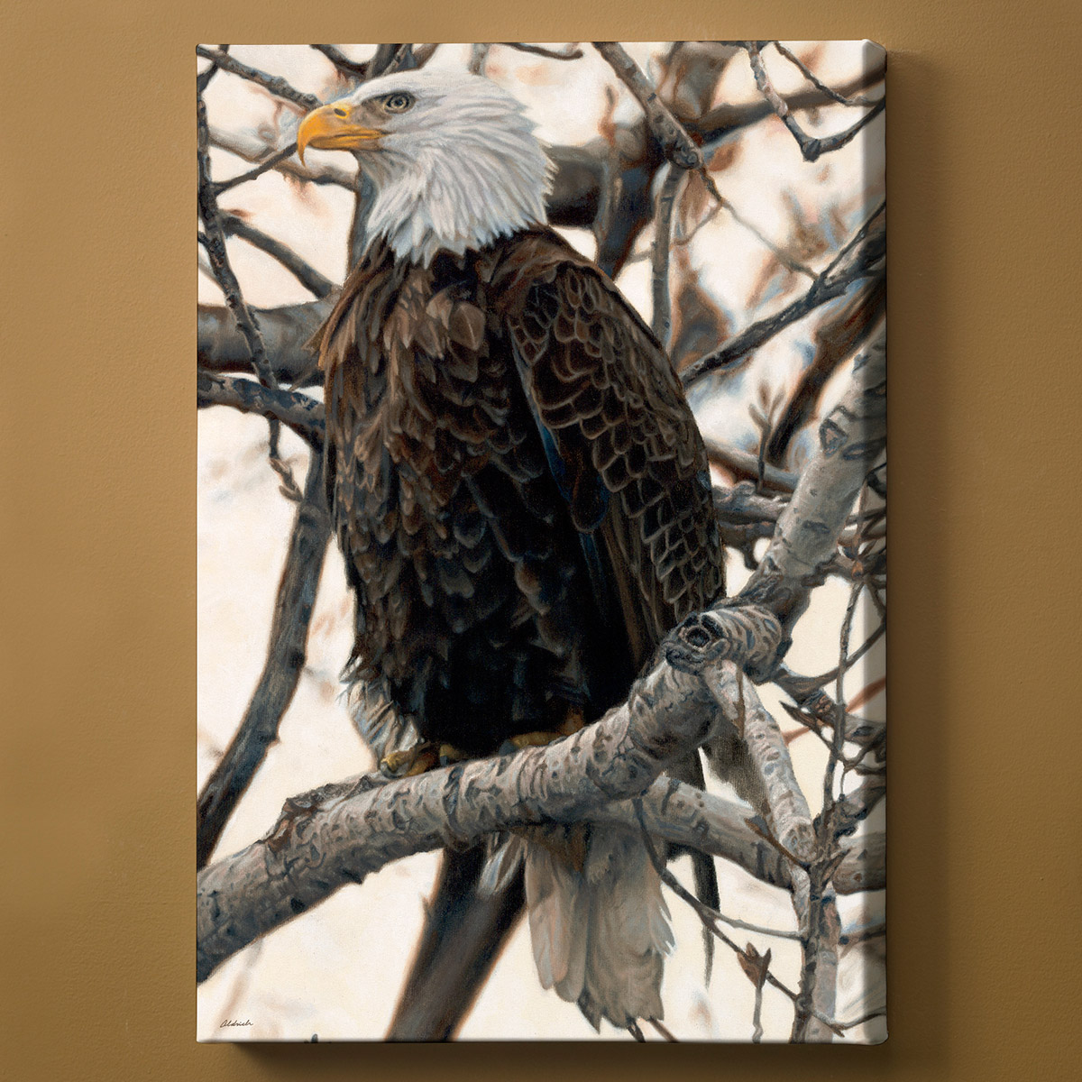 Watchful Bald Eagle Wrapped Canvas