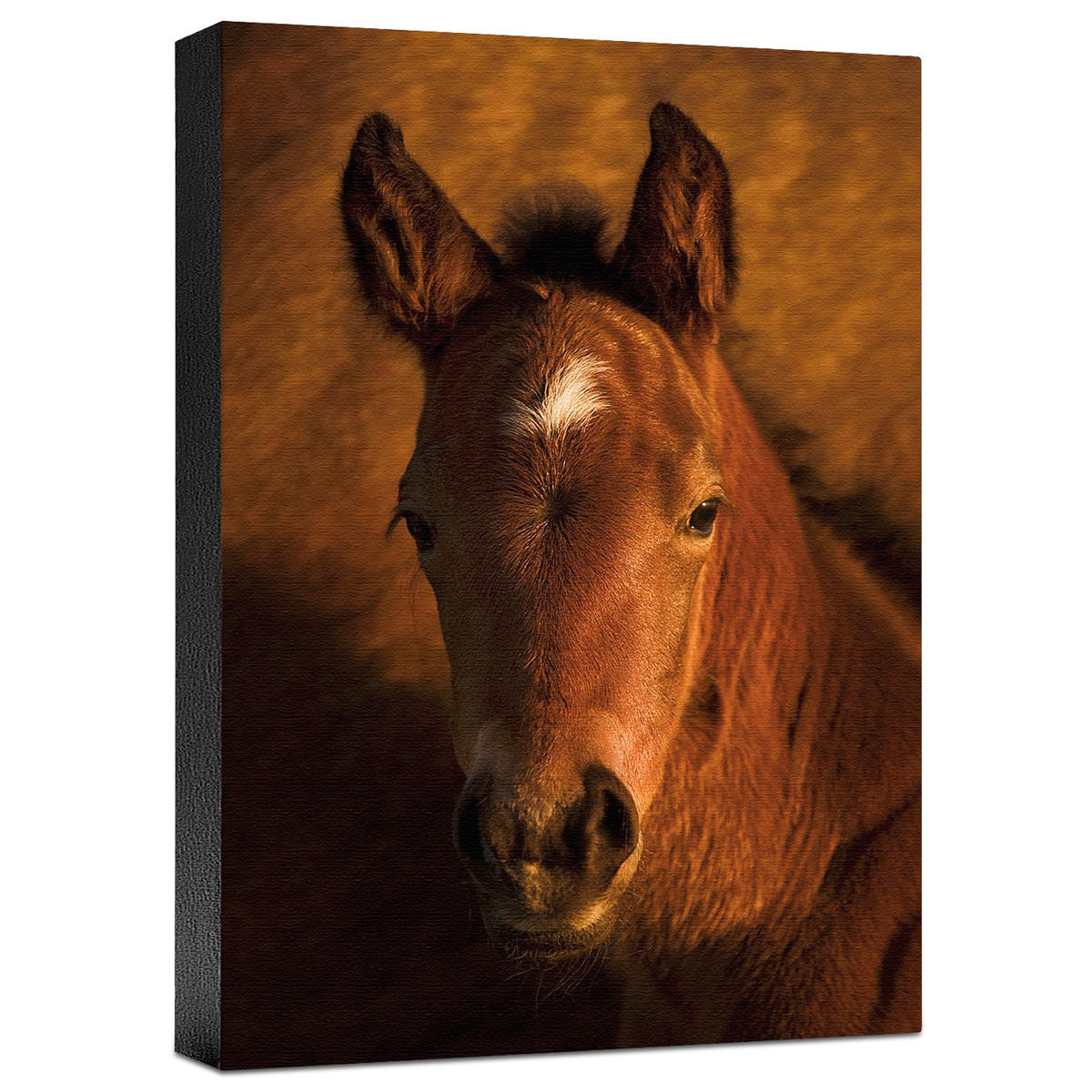 What's Up Gallery Wrapped Canvas