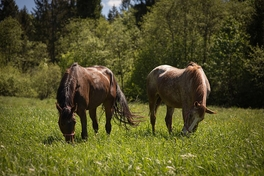 What To Do Now About Equine Herpes Virus 1 (EHV-1)