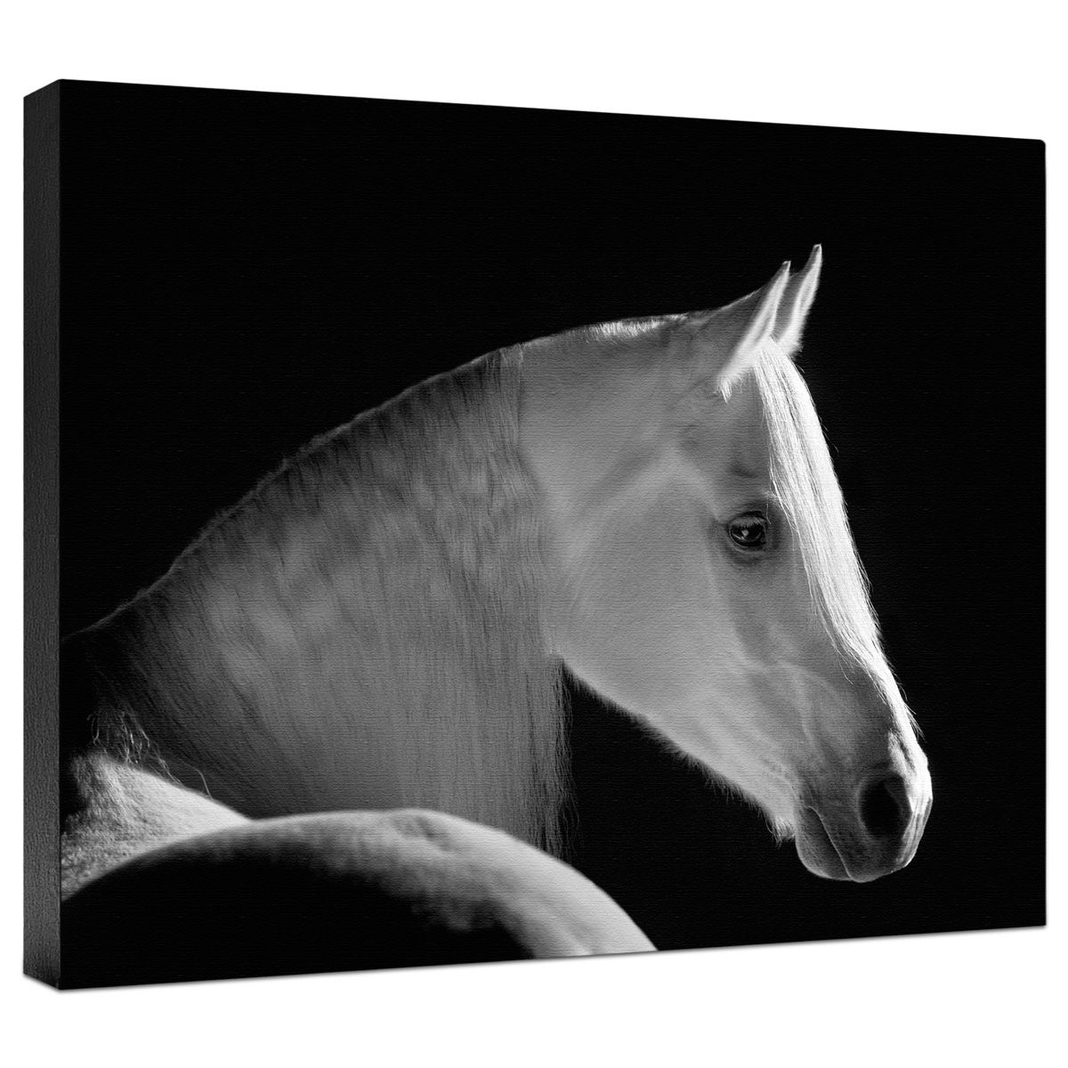White Shadow Gallery Wrapped Canvas