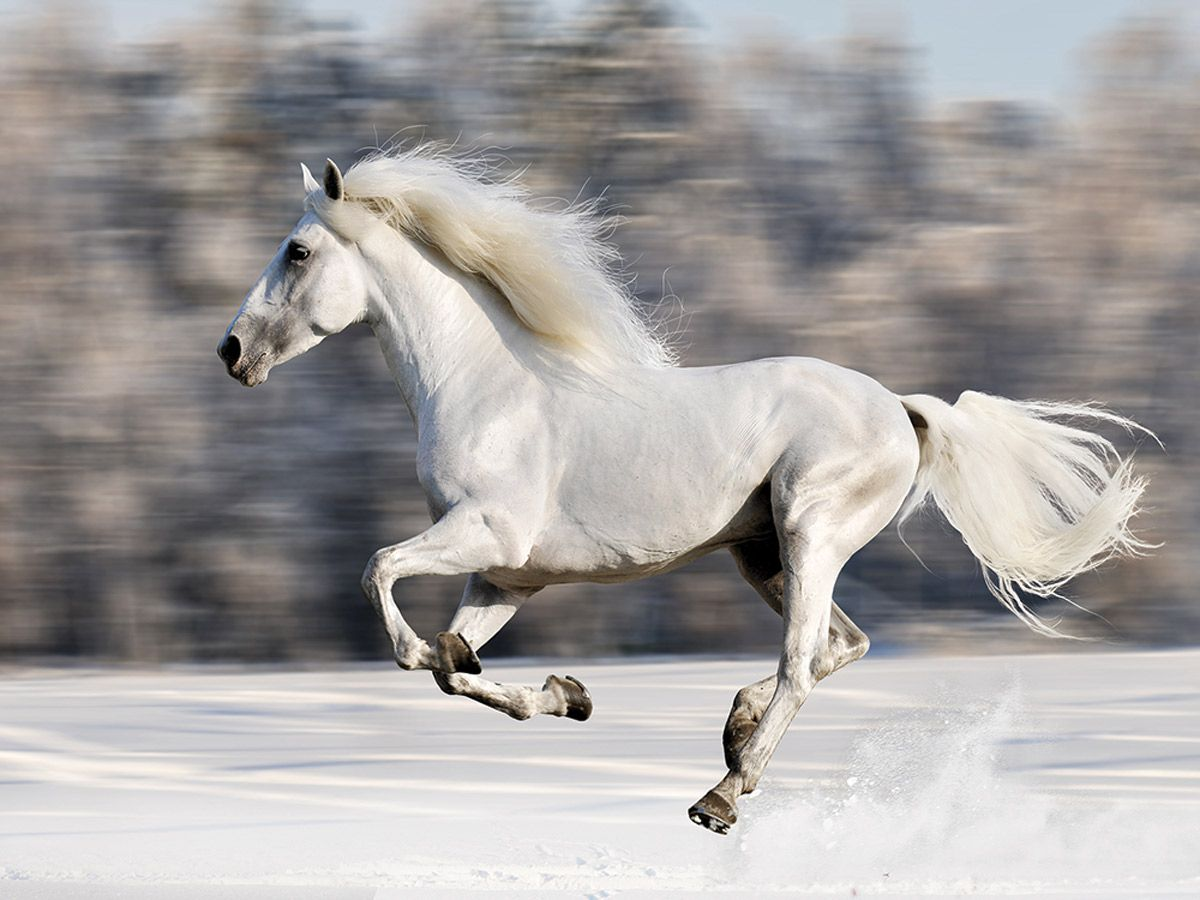 Wild Winter Horse Canvas Wall Art