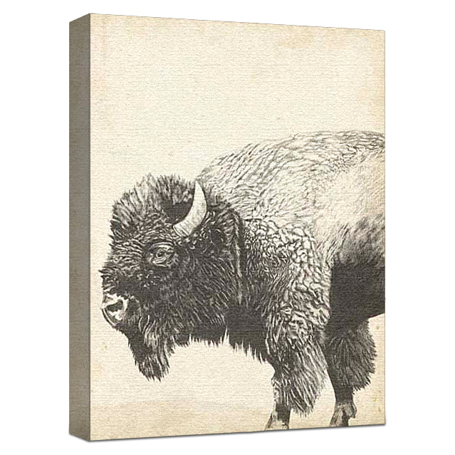 Wildlife Snapshot Buffalo Gallery Wrapped Canvas