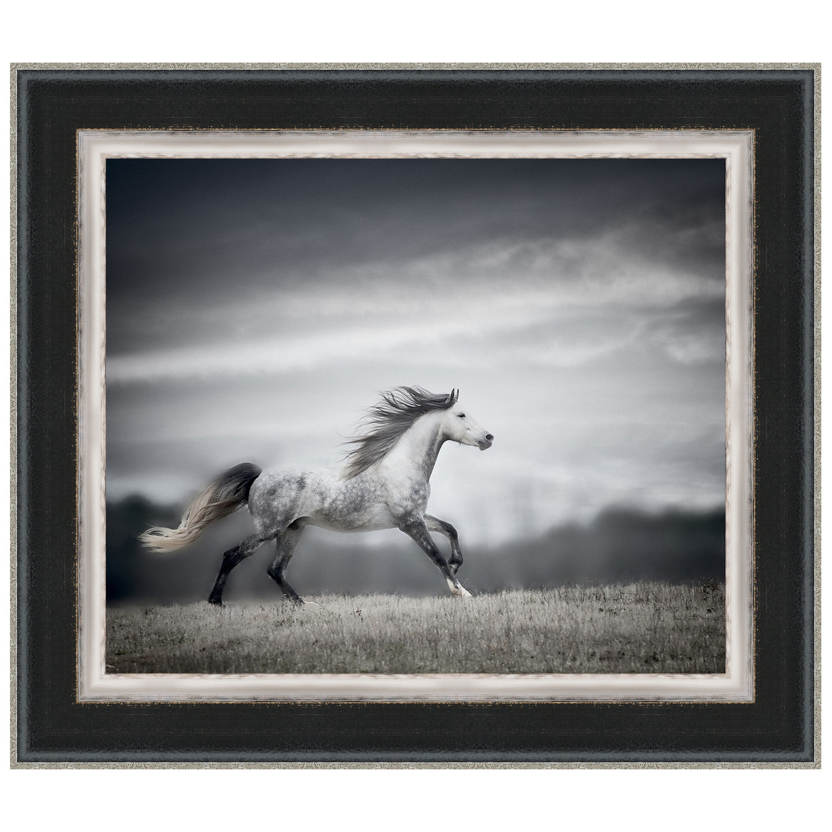 Wind Blown Mane II Framed Print
