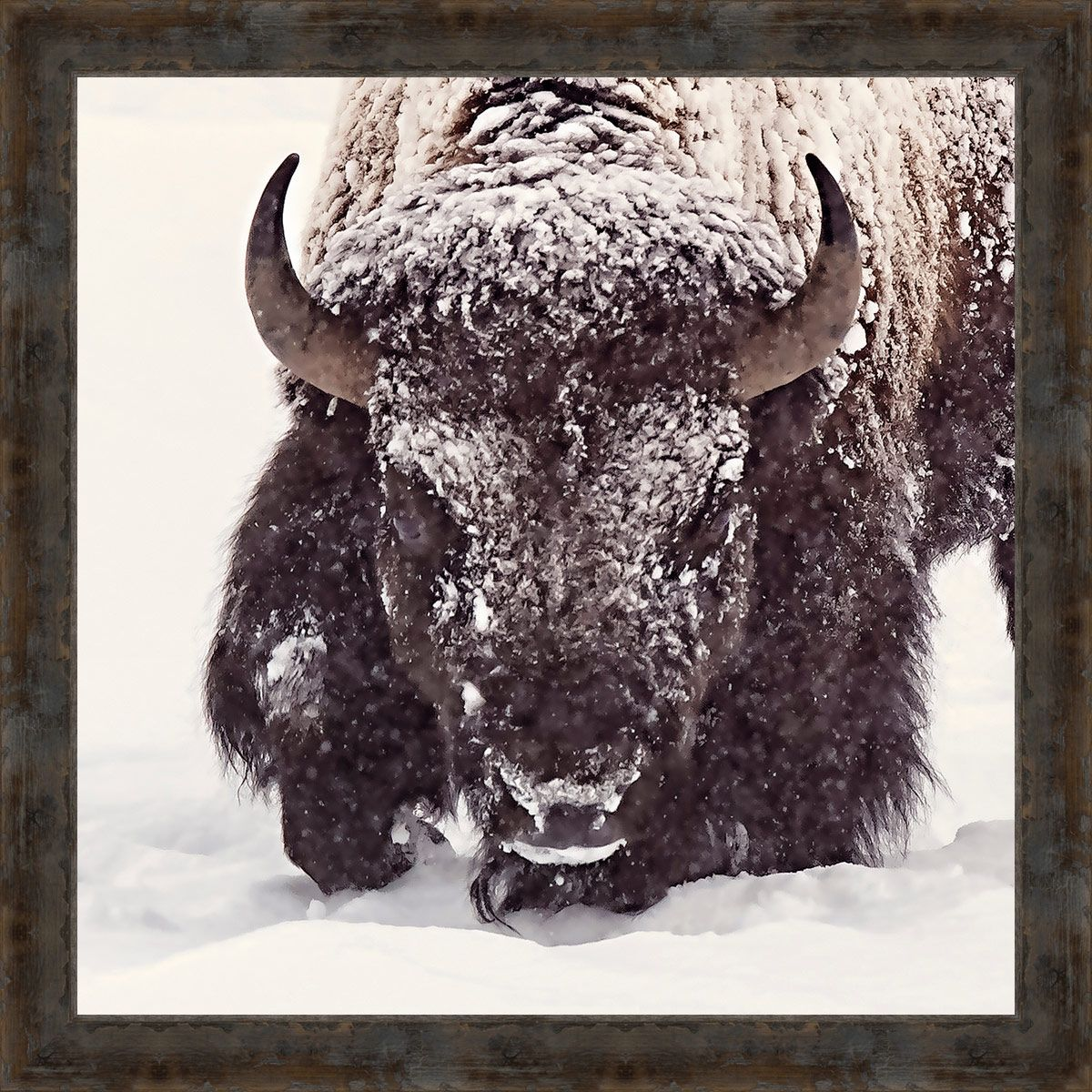 Winter Buffalo Framed Wall Art