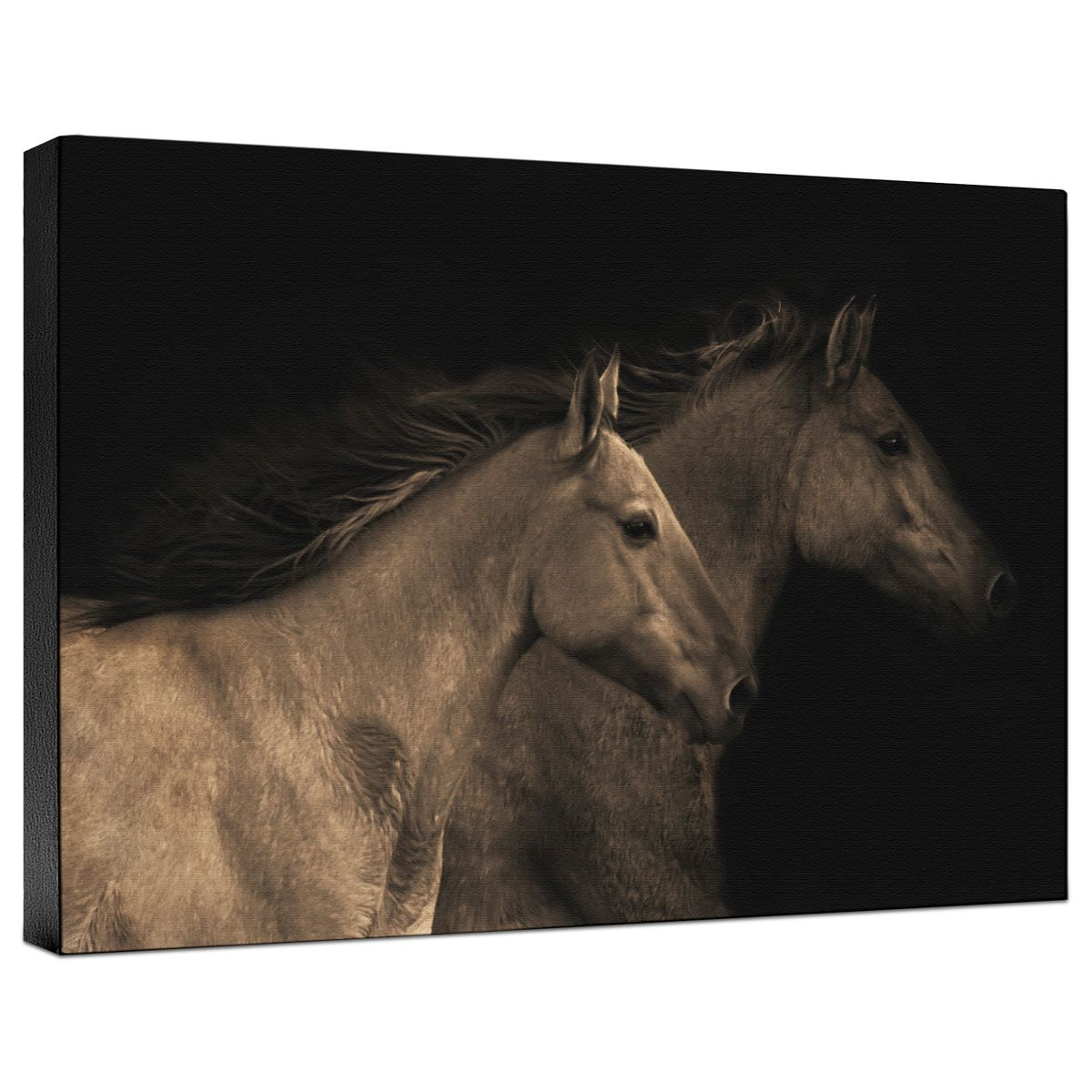 Young Mustangs Gallery Wrapped Canvas