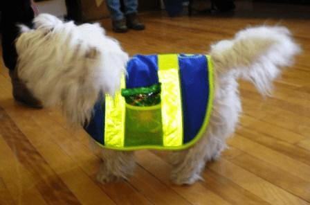 Dog Cat Pet Reflective Safety Vest, Price includes free shipping, Small 12 Inches long and up to 20 inches wide. Small Dog Vests, 20 lbs to 30 lbs Beagle, Corgi and Cocker Spaniel type dogs outside USA add $5