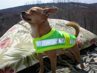 Hi viz vests, Reflective Safety Vest, Dog Cat Pet safety vest, from $23.00 Price includes free shipping