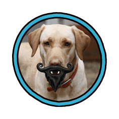 Humunga Stache and Beard by MPets **WARNING** Only for dogs with a sense of humor!