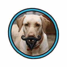Humunga Stache and Beard from $13.95 ** Price includes free shipping **by MPets **WARNING** Only for dogs with a sense of humor!