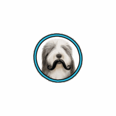 Humunga Stache from $13.95 ** Price includes free shipping **by MPets **WARNING** Only for dogs with a sense of humor!