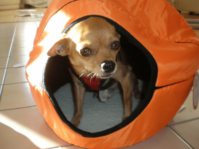 Small pet, dog bed or cat bed Basketball style.(Includes Free shipping)