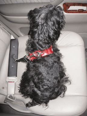 Video on Pets in Cars a Potentially Lethal Distraction for Drivers, Study Finds