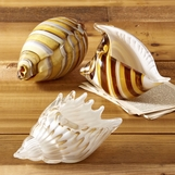 Neve Glass Shells Set