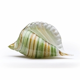 Sanibel Glass Conch Shell | Green Swirl