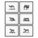 Zoology Animal Prints | Set of 6