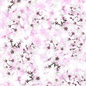 CHERRY BLOSSOMS - Orchid Pink