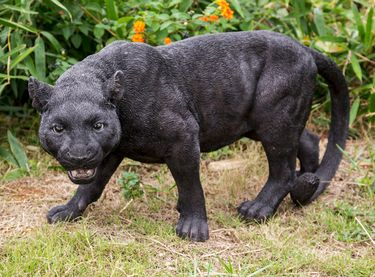 Black Panther Stalking Statue