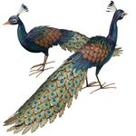 Roaming Peacocks (Set of 2)