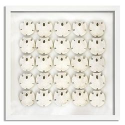 25 Keyhole Sand Dollars Beach Wall Art - Two Frame Options
