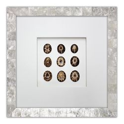Brown Limpet Shells Beach Wall Art