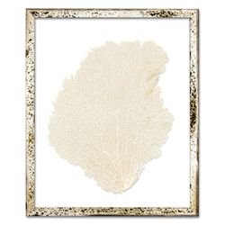 Classic Sea Fan Beach Wall Art - Oyster