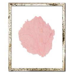Classic Sea Fan Beach Wall Art - Salmon <font color=cf2317> NEW</font>