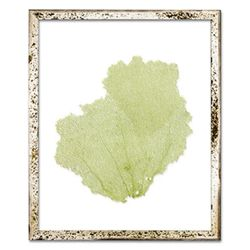 Classic Sea Fan Beach Wall Art - Sea Moss